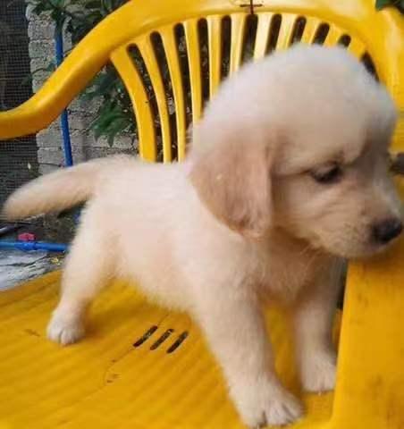 广州哪里有狗场,好的犬舍是哪家,广州汇星犬舍5