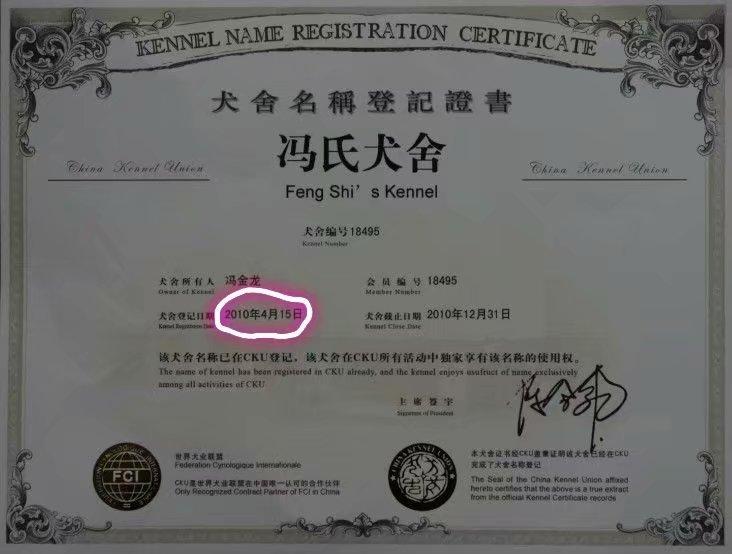 沈阳本地灰泰迪出售 CKU注册犬舍2