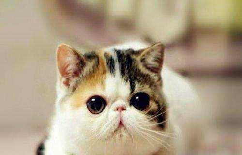 深圳哪里有卖加菲猫可以视频看猫