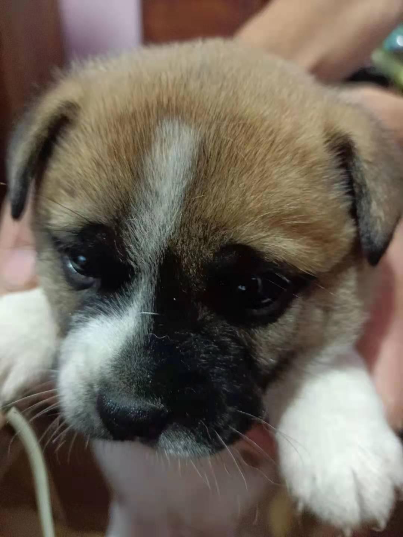 多种颜色的超级可爱的小幼犬寻找主人爱狗人士优