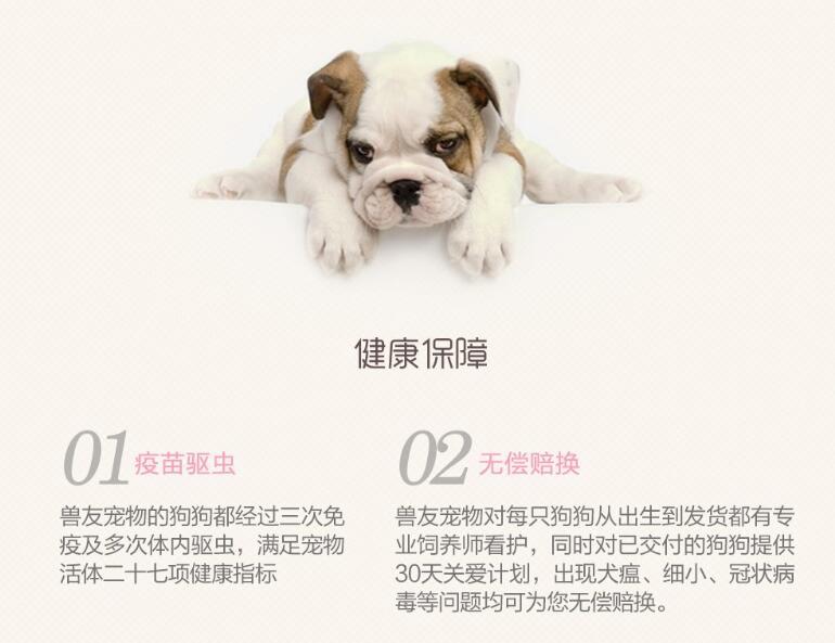 高智商边境牧羊犬幼犬出售 诚信交易 终身包纯包健康7