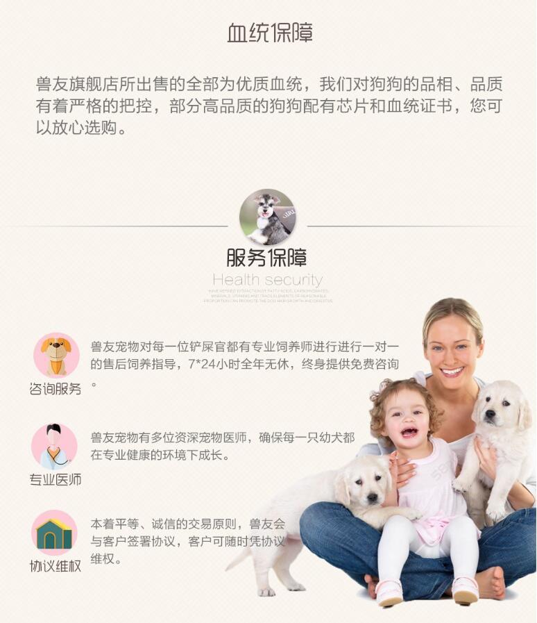 高智商边境牧羊犬幼犬出售 诚信交易 终身包纯包健康8