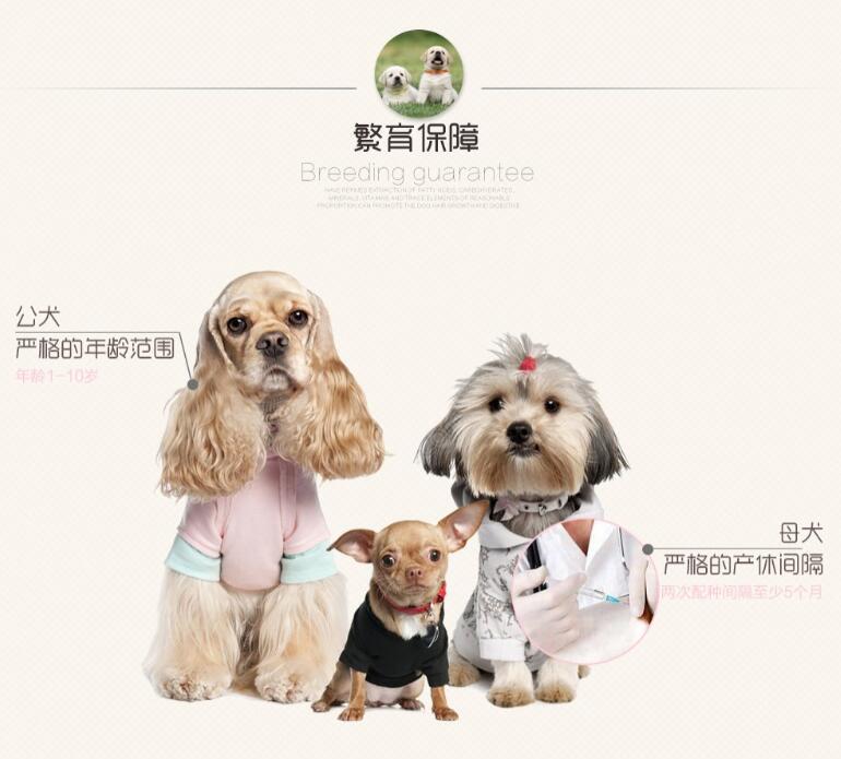 高智商边境牧羊犬幼犬出售 诚信交易 终身包纯包健康9