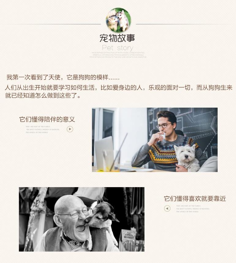 高智商边境牧羊犬幼犬出售 诚信交易 终身包纯包健康10