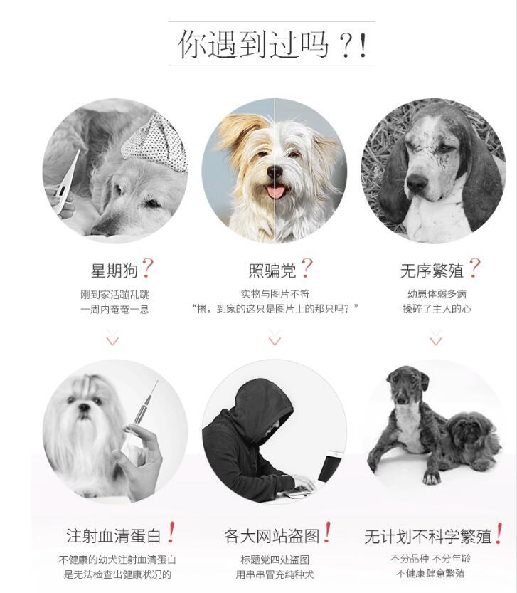 双血统柯基犬幼犬出售 全网发货 买狗送赠品 周边可送货到家5