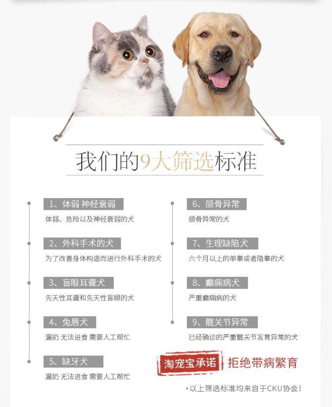 双血统柯基犬幼犬出售 全网发货 买狗送赠品 周边可送货到家8