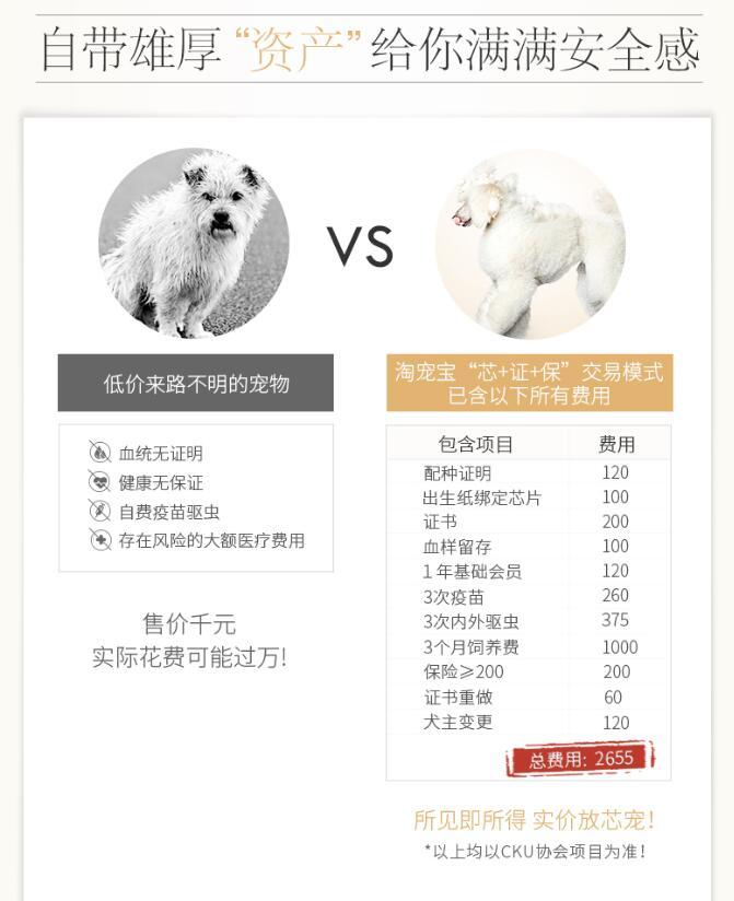 双血统柯基犬幼犬出售 全网发货 买狗送赠品 周边可送货到家9