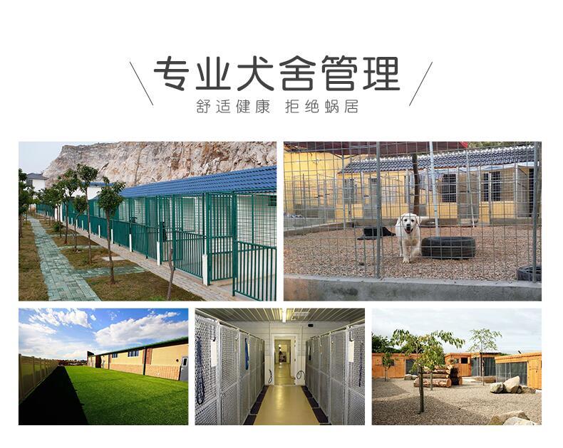 柴犬幼犬出售 颜值高身体好 保活签协议 诚信交易5